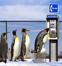 Penguins on phone